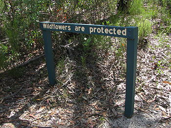 Wildflowers are protected.