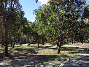 It's a large picnic area with lots of shady trees.
